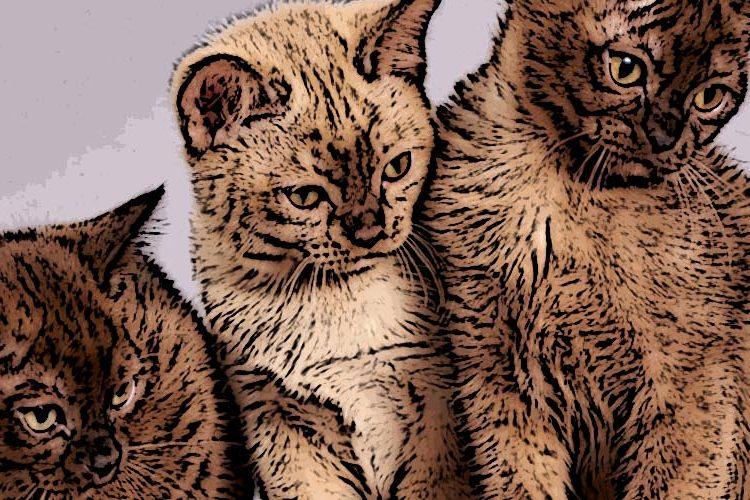 Koci marketing – 9 najciekawszych kampanii zudziałem kotów