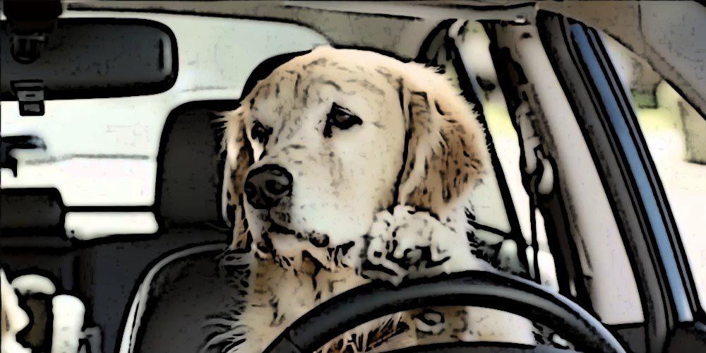 Psi marketing - 10 najciekawszych kampanii reklamowych z udziałem psów