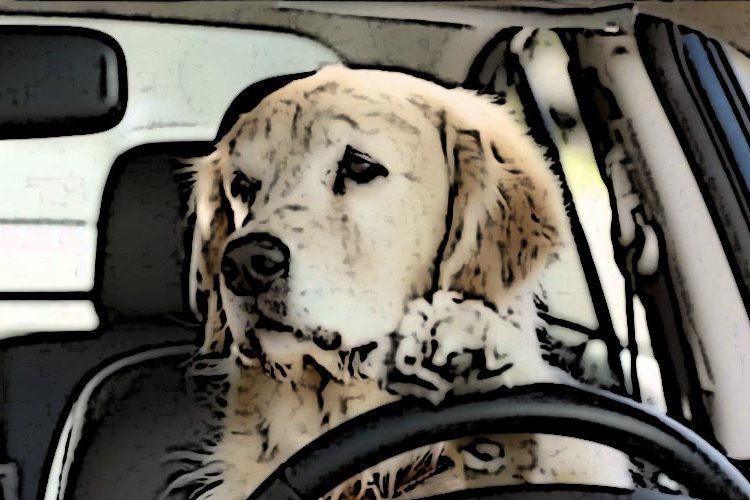 Psi marketing - 10 najciekawszych kampanii reklamowych zudziałem psów