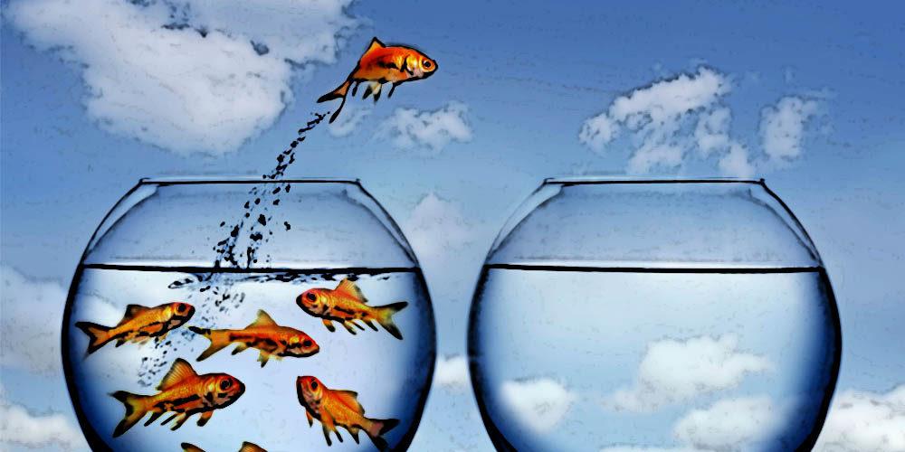 Strategia błękitnego oceanu w praktyce – Apple, Ford, Cirque du Soleil i Canon