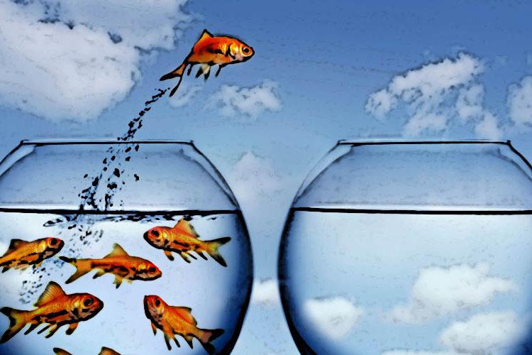 Strategia błękitnego oceanu wpraktyce – Apple, Ford, Cirque du Soleil iCanon